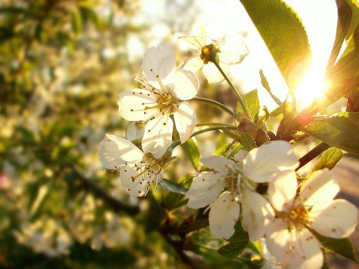 Kevät_tulee_muistilista